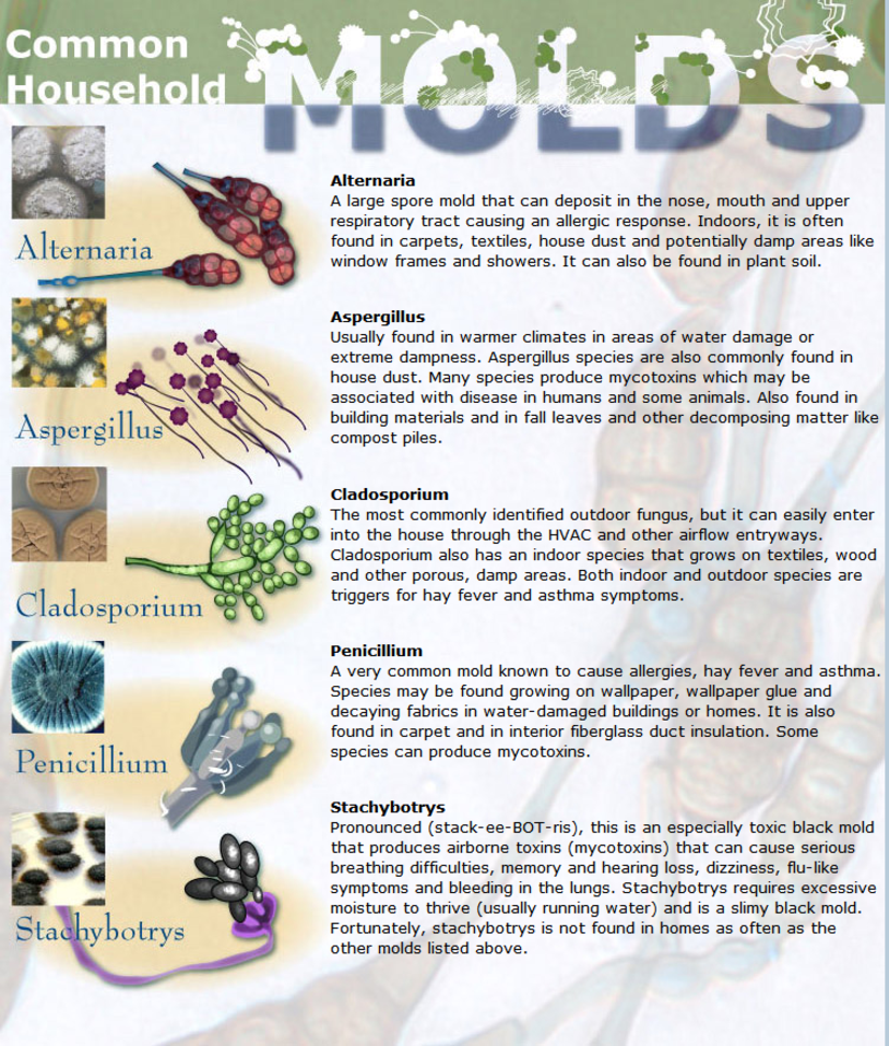 common household molds