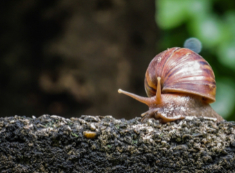 How Long Do Snails Sleep The Answer Will Surprise You